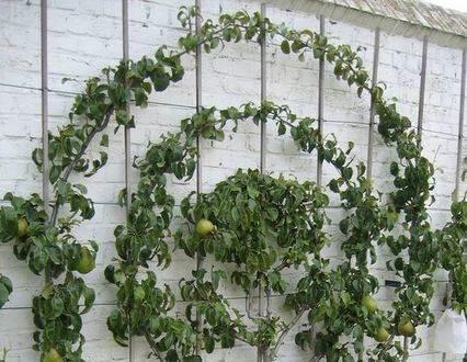 кирпичный-забор-пальметное-садоводство