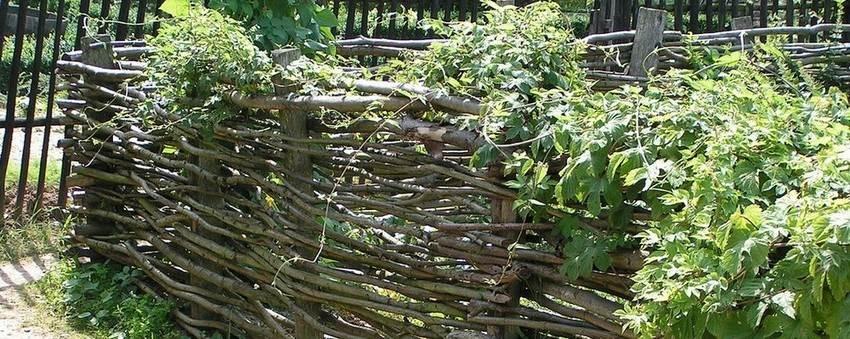 плетенный-забор-живые-растения
