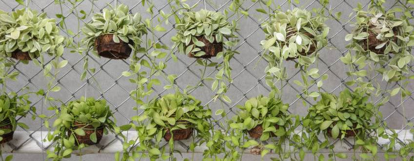 сетка-рабица-вертикальный-сад